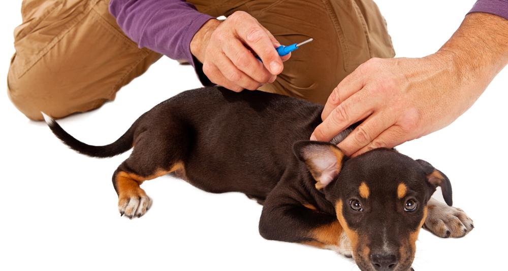 dog tracker under skin